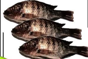 Manfaat Ikan Mujair Untuk Tingkatkan Produktifitas Pria